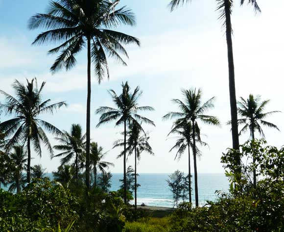 Borneo Trees